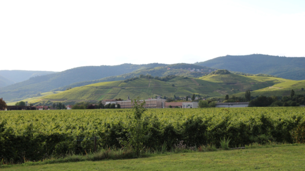 The hillsides at turckheim and the zind humbrecht winery cover