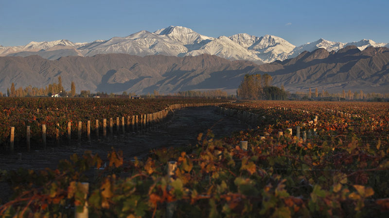 Vineyards in mendoza 1