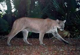 Photo courtesy National Audubon Society