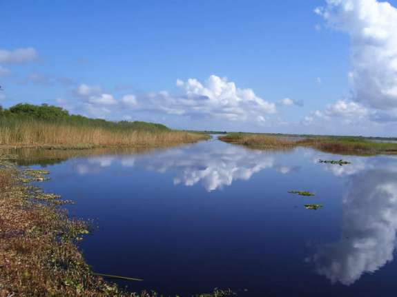 The Indian River Lagoon is among Florida's hardest-hit water bodies. Photo courtesy Brevard County
