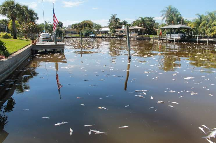 Florida officials it appears no more fish are dying for Cocoa beach fishing