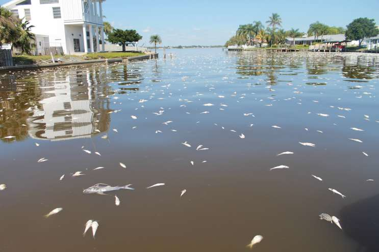 Last year's fish kill was only the latest in a series of setbacks for the Indian River Lagoon. Photo by Amy Green