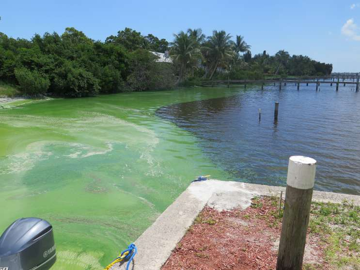 Toxic algae blooms plagued the Indian River Lagoon in 2016. Photo: WMFE file