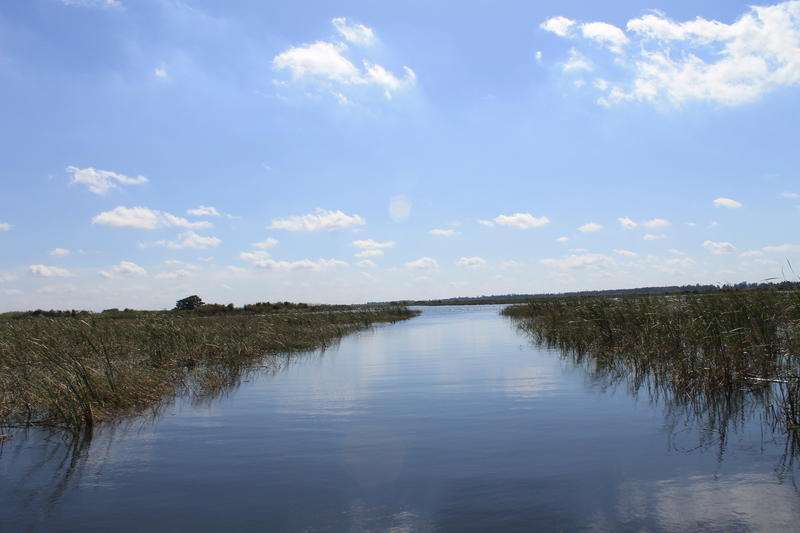 The bulrushes rimming Lake Okeechobee form trails of sorts for boaters. Photo by Amy Green
