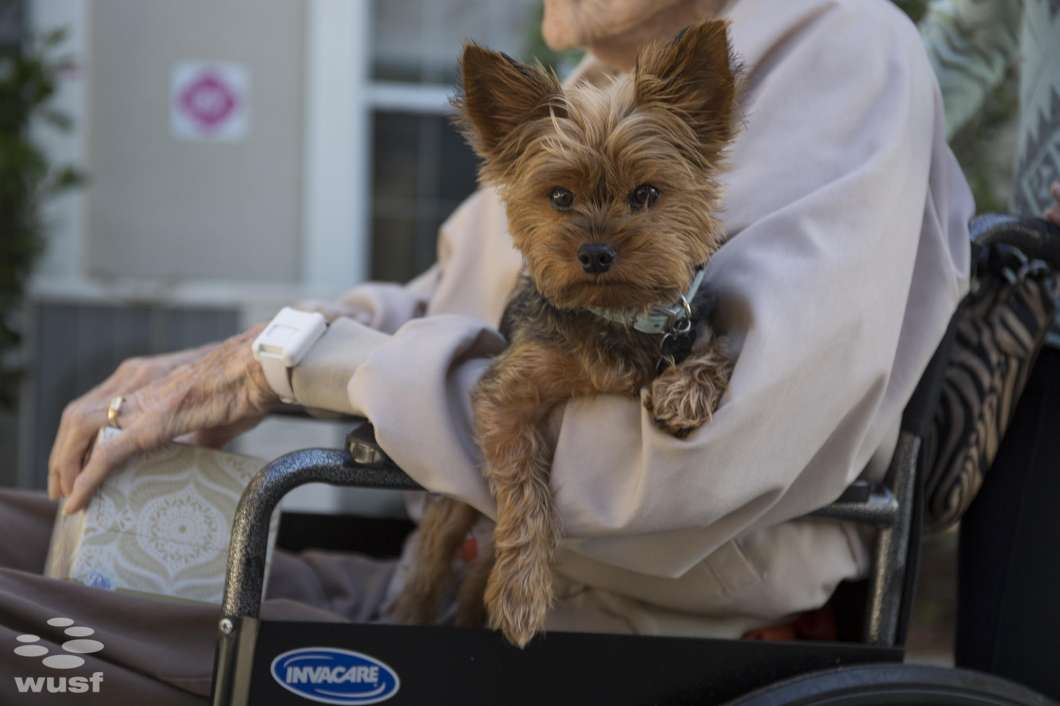 Lee Dodge, a 90-year-old World War II veteran, lives at Bridgewater, an assisted living facility at Waterman Village in Mount Dora. His hospice program has arranged for his Yorkie, Huey, to live with him.
