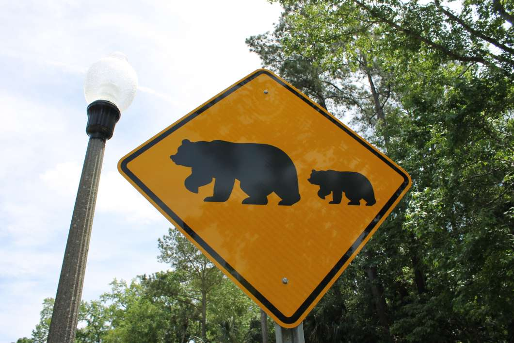 Bear crossing sign. Photo: Matthew Peddie, WMFE