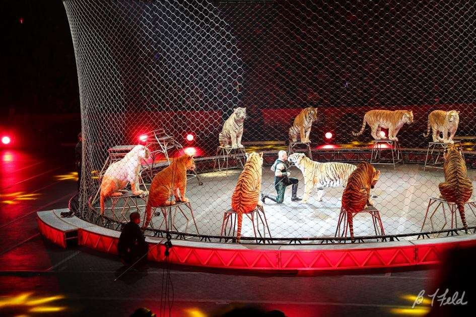 Photo courtesy of Ringling Bros. and Barnum & Bailey Circus FB page