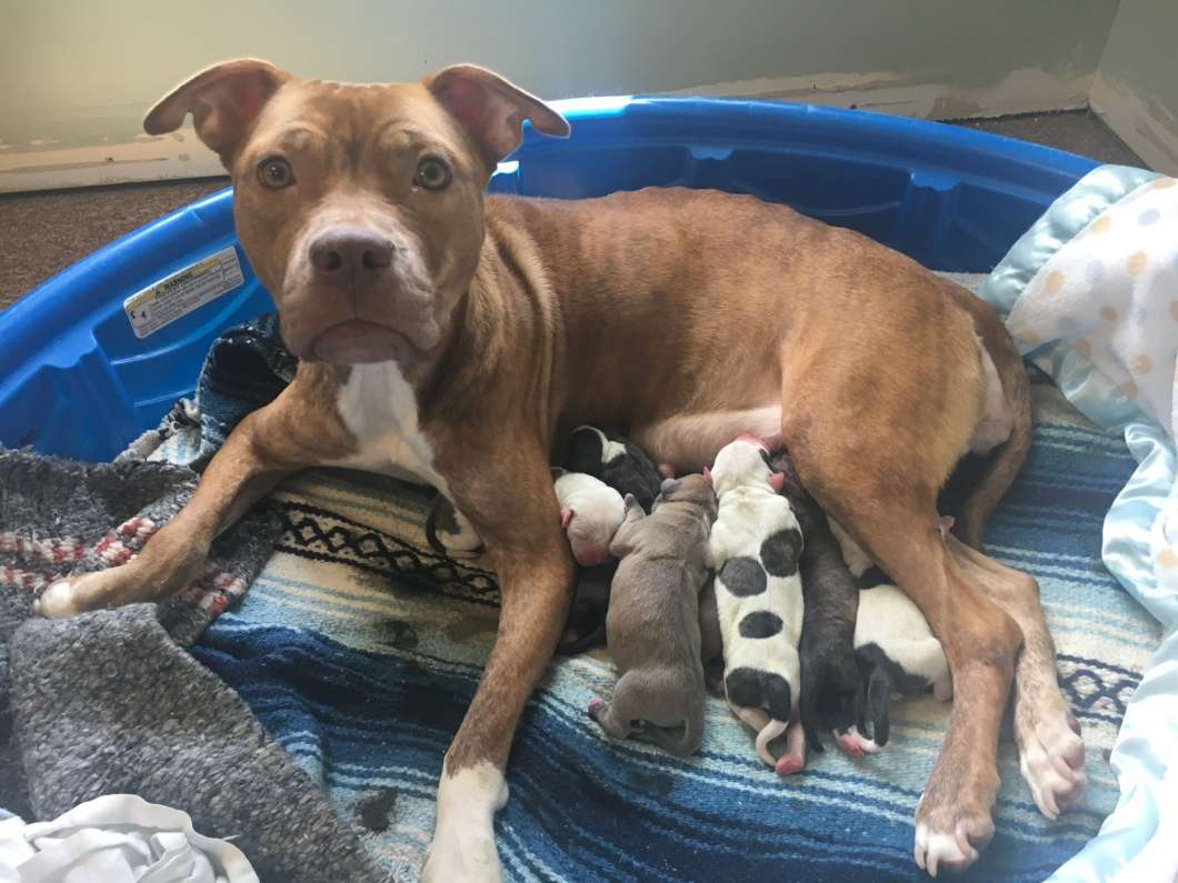 Puppies born at the Lake County Animal Shelter after Hurricane Irma will soon be up for adoption. Photo: Lake County Animal Shelter / Facebook