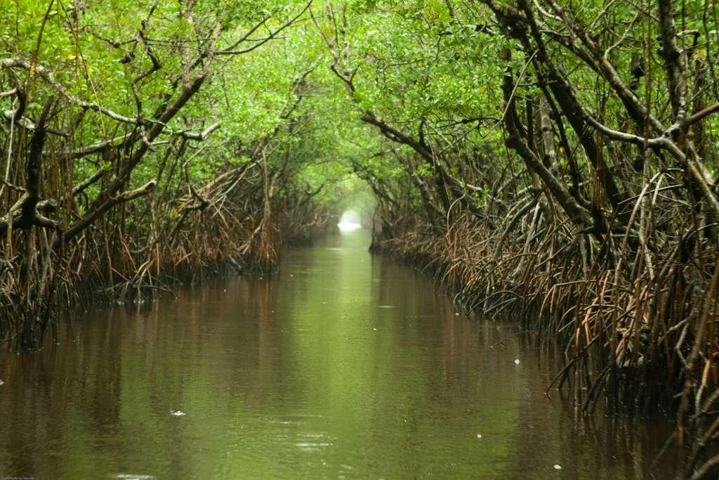 Florida Everglades. Photo: Chauncey Davis on Flickr.