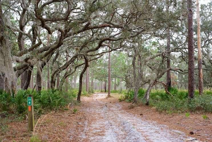 Image: Split Oak Forest by Monivette Cordeiro