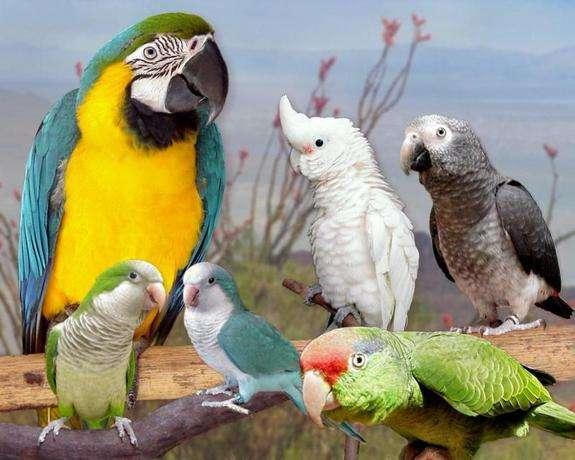 Image: Exotic Bird Show, centralfloridafair.com