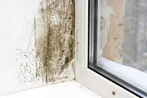 Call a mold specialist for a professional mold inspection.
