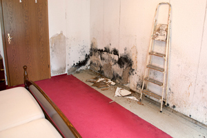 Mold Damage Restoration