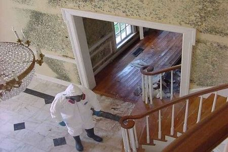 Offer mold removal   free estimate