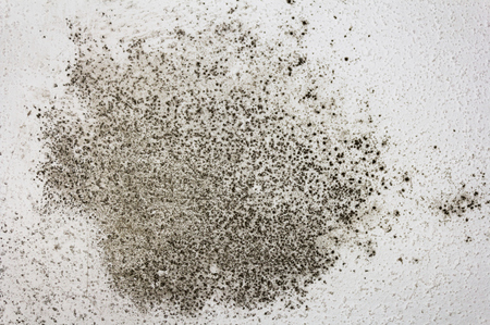Offer thinkstockphotos 463781913 black mold removal
