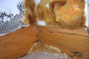 Mold Damage, Valparaiso, IN