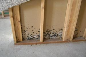 Black Mold Removal, Valparaiso, IN