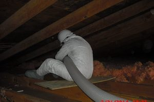 attic decontamination
