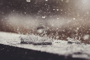 A Wet Spring Can Lead to Mold Damage This Summer: Prevention Tips