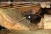 AdvantaClean of Lorton, Manassas, Fredericksburg: Keep Crawlspaces Safe & Dry With Crawlspace Encapsulation