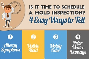 4 Signs You Need to Schedule a Mold Inspection