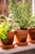 How to Use a Garden Window to Create an Indoor Herb Garden
