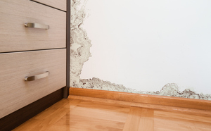 Mold Removal: A Job for the Experts