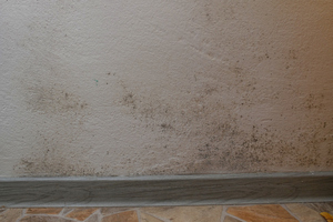What You Should Know About Mold Restoration Services Like Ours