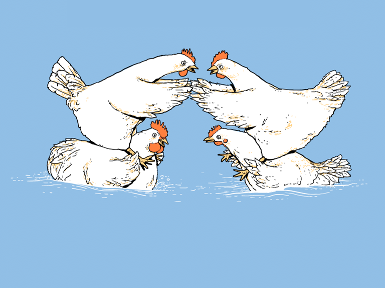 [Image: Chicken_Fight1bsDetail.png]