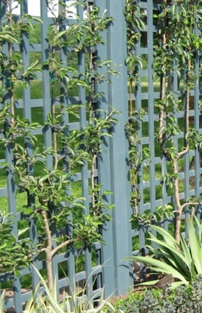 How to Build a Trellis - Climbing Plants