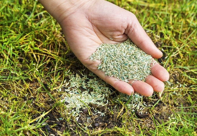 Spring Lawn Care - Seeding