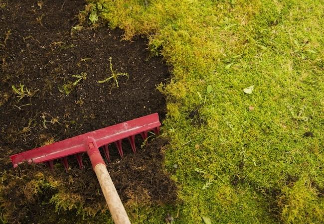 How To: Grow Moss