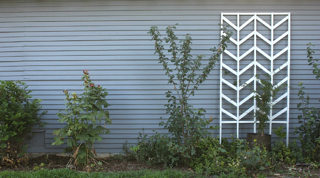 DIY Trellis - Chevron