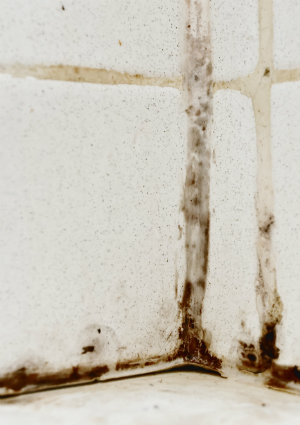How to Get Rid of Mildew Smell - Mold Detail