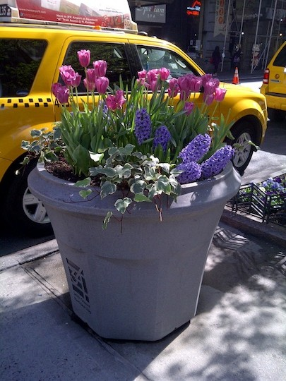 New York City Street Container Garden