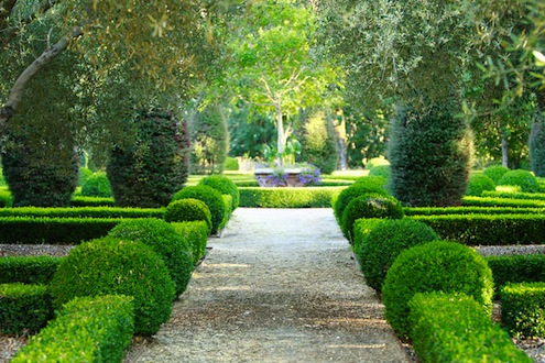 Boxwoods Maintaining Structure in Your Garden Bob Vila