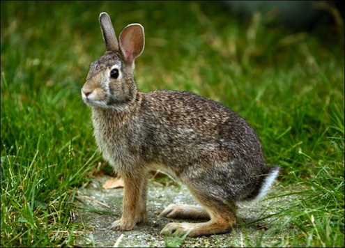 AnimalPlannet-rabbit-picture