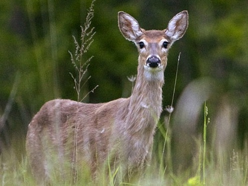 How To Keep Rabbits Out Of The Garden Deer Groundhogs Bob Vila