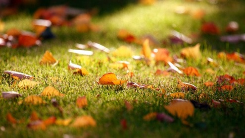 Fall Lawn Care