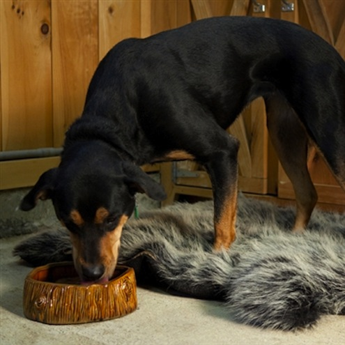 Faux Bois Dog Bowl