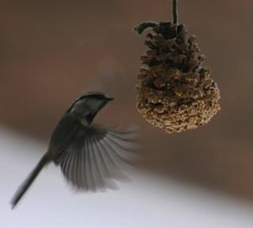 Pine Cone DIY - Bird Feeder