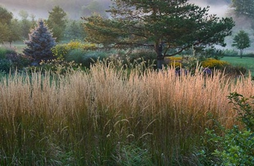Ornamental grasses bob 39 s blogs for Tall feather grass