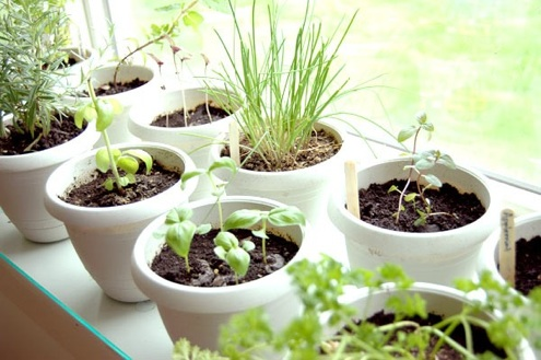 Grow Herbs Indoors - Potted Herb Garden