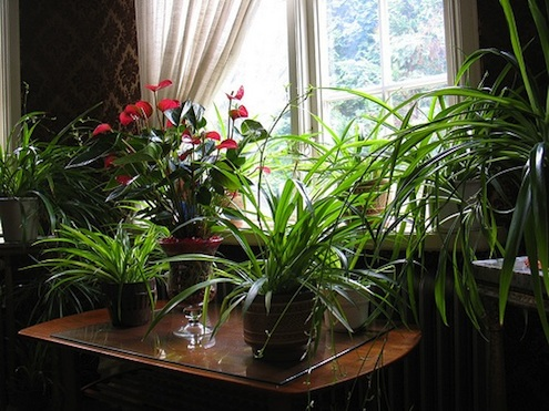 Indoor Plants Winter Care