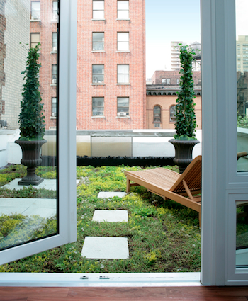 Gleicher Sharkey Townhouse - Living Roof