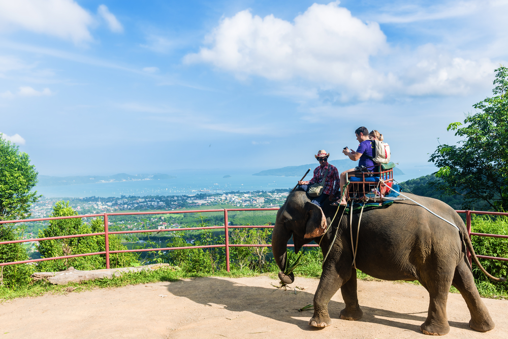 Elephant trekking in Phuket island_368268344