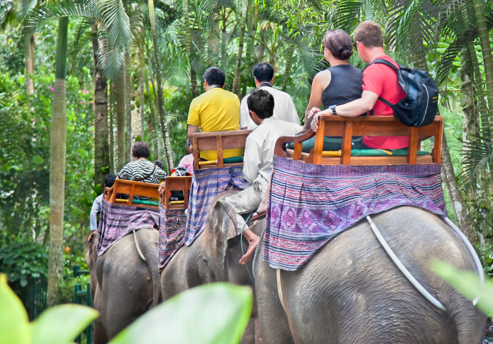 Ride elephants throw jungle_99007106