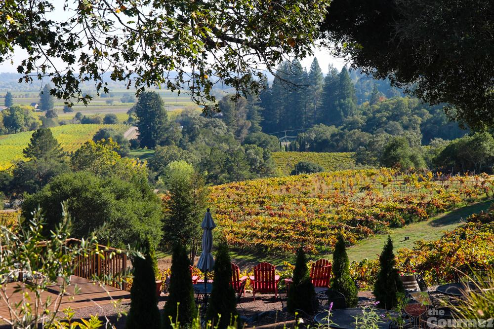 wine road, sonoma county, winter wineland, armida, armida winery, russian river valley, grapevines