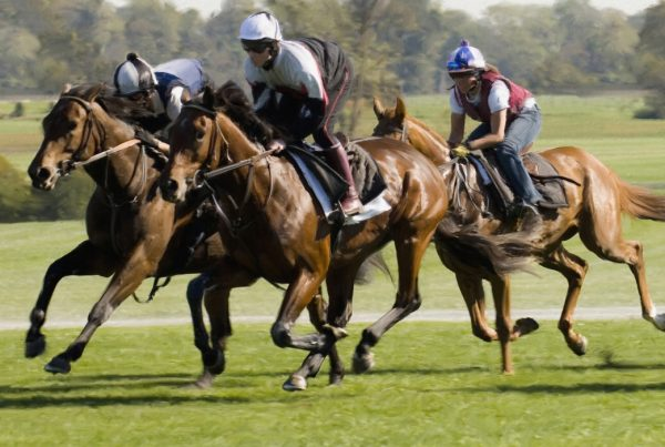 Picture of 3 horse race