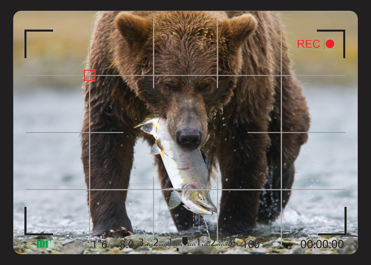 Users in Focus:  How To Tame A Bear of a Model and Save Hundreds of Hours